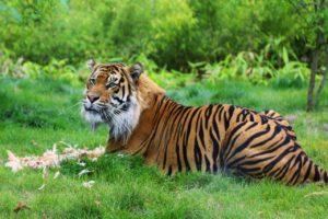zoo di londra 5